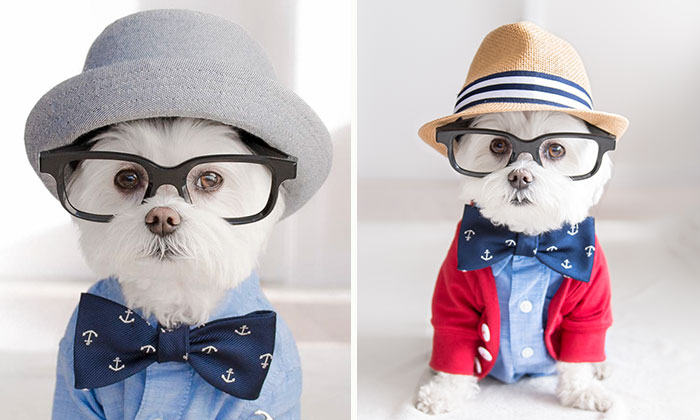 Meet Our Hipster Dog Toby, The Ryan Gosling Of Dogs