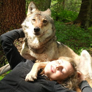 How I As French Man Ended Up Volunteering At A Wolf Sanctuary In Russia