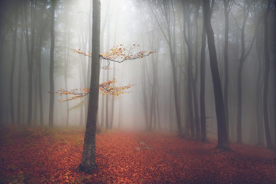 I Captured 'Stories Of The Forests' Inspired By My Grandmother's Tales