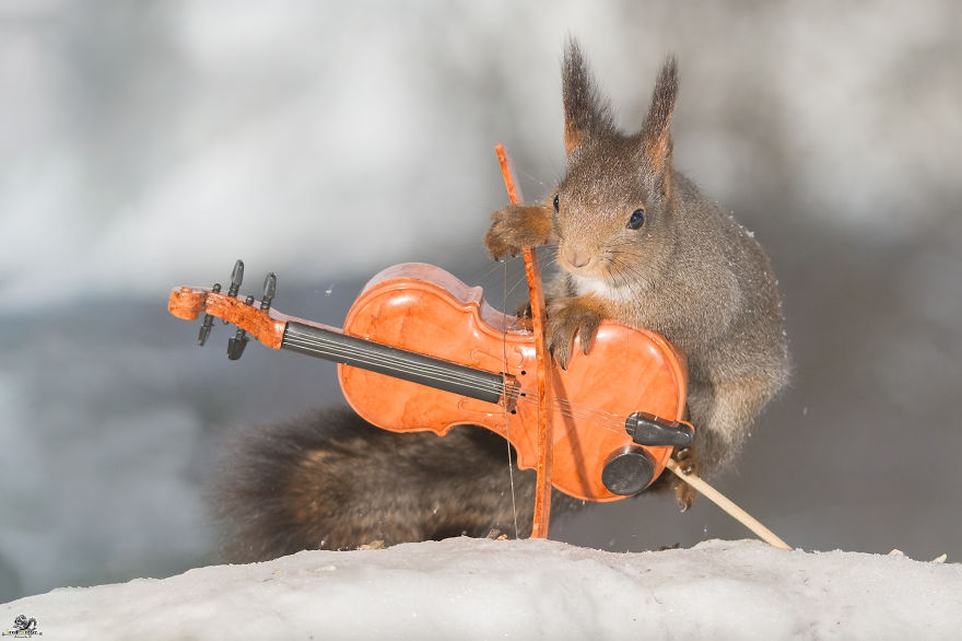 I Shoot Squirrels With Tiny Musical Instruments Through My