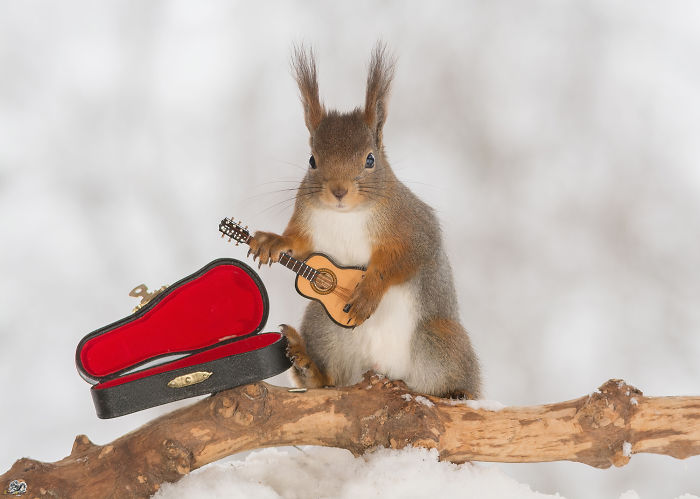 I Shoot Squirrels With Tiny Musical Instruments Through My Kitchen Window