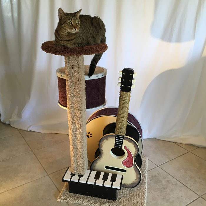 I Made A Cat Tree Out Of Musical Instruments