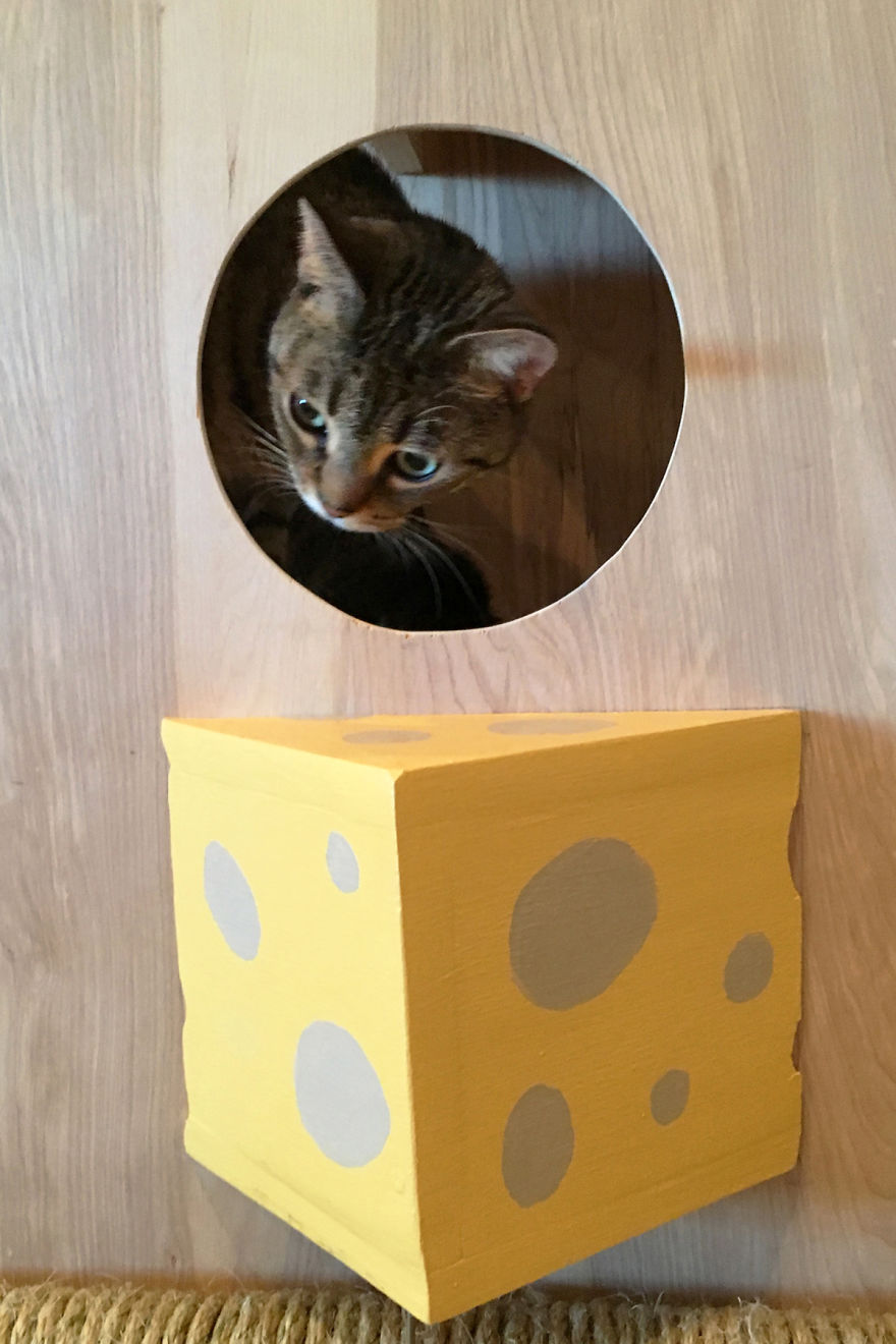 I Made A Giant Mousetrap For Cats