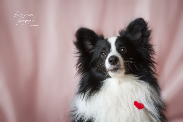 "I Made ""valentines Day"" Themed Dog-portraits"