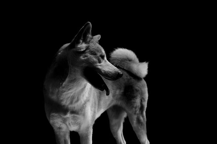 I Photograph The Natural Behaviour Of Dogs In Black And White