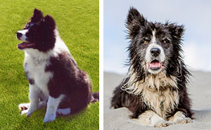 A Dog Who Vanished Without A Trace 7 Years Ago Finally Reappeared,  And I Did His Photoshoot