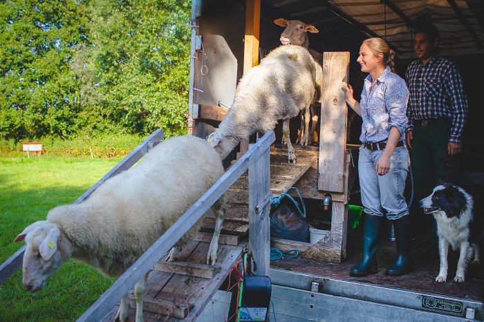 I Wanted To Know How To Make Feta And I Joined Anna On Her Small Farm.