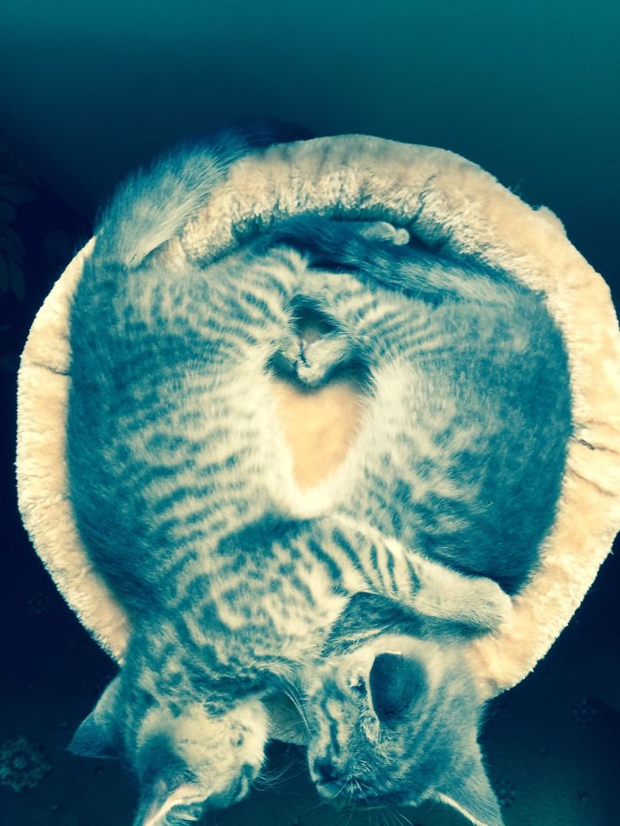 Kittens Make A Heart With Their Legs