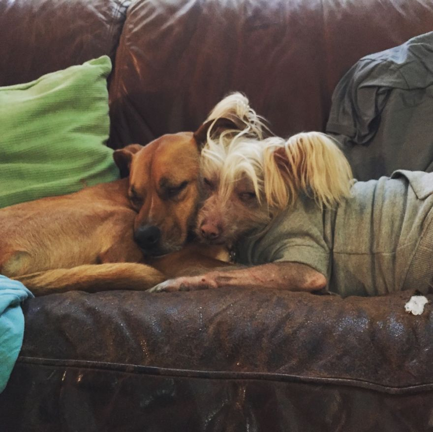 Doggie Snuggles❤️