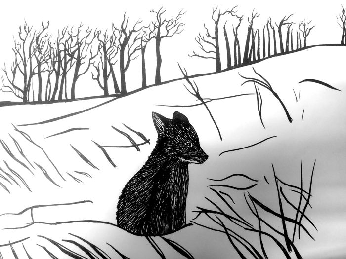 Baby Black Fox. Ink Illustration By Rasa Warg