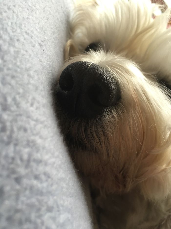 Tired Nose