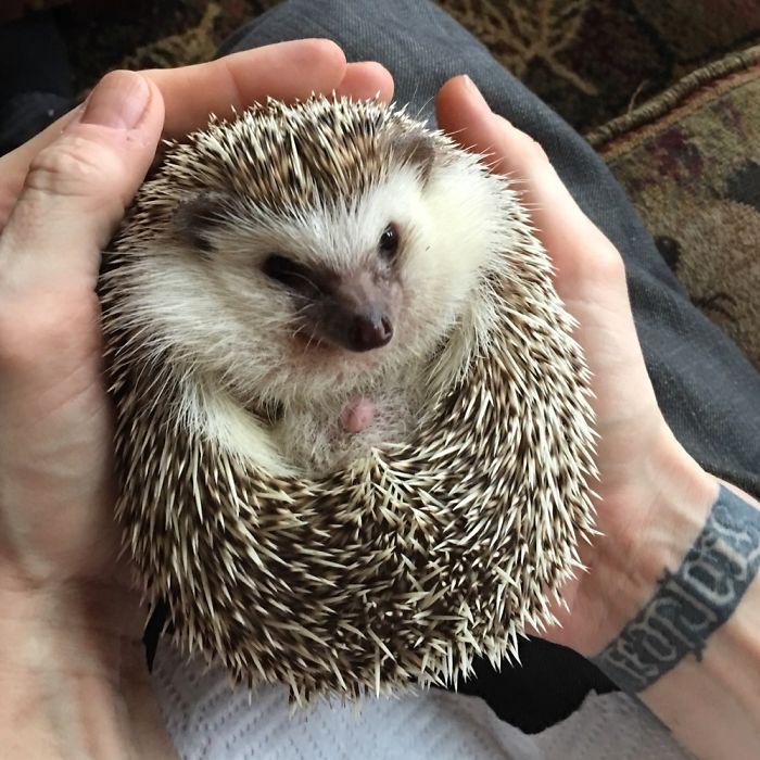 Prickly Hedgehog Ball Of Love!