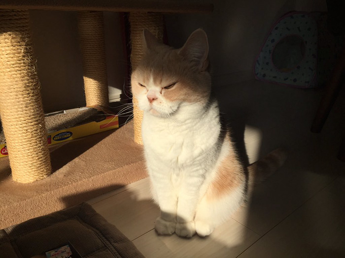 japanese-grumpy-cat-angry-koyuki-moflicious-34