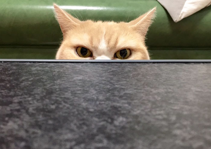 japanese-grumpy-cat-angry-koyuki-moflicious-41