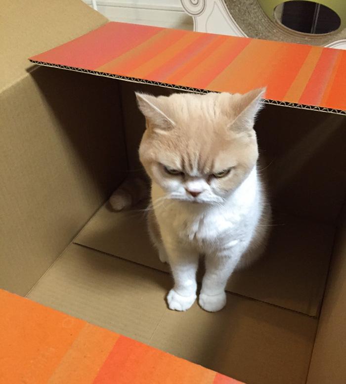 japanese-grumpy-cat-angry-koyuki-moflicious-7