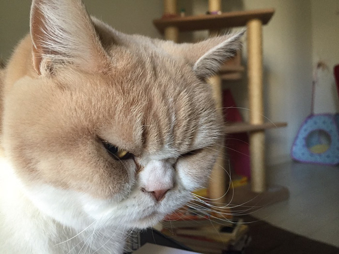japanese-grumpy-cat-angry-koyuki-moflicious-8