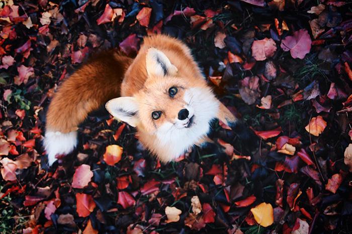 juniper-fox-happiest-instagram-15
