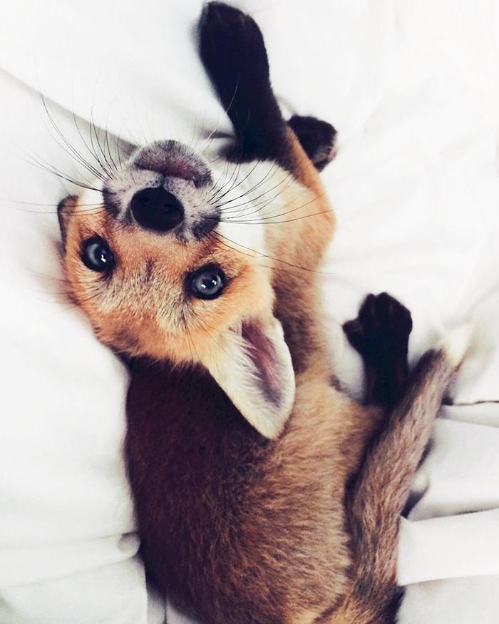 juniper-fox-happiest-instagram-20