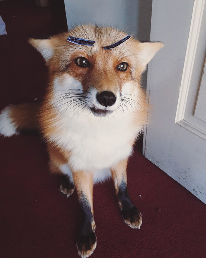 juniper-fox-happiest-instagram-25