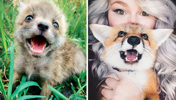 Meet Juniper, The Pet Fox Who's Basically An Orange Dog
