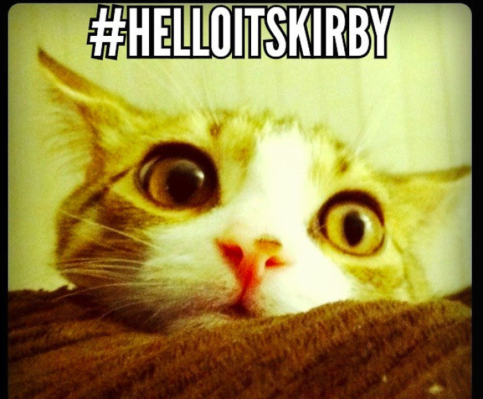 Hello, It's An Adele Cat Parody