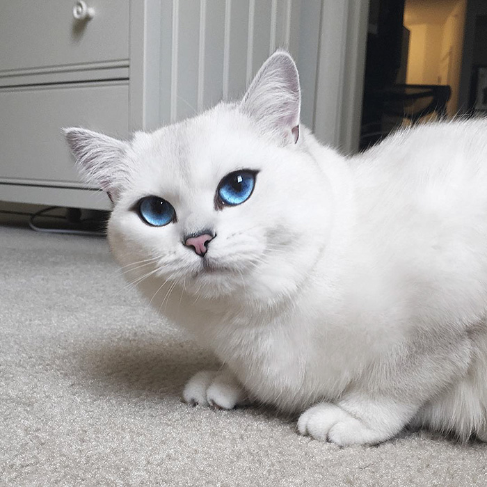 This Cat Has The Most Beautiful Eyes Ever Bored Panda - 24 beautiful animals with different coloured eyes