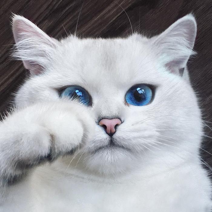 Vyzerá, ako obyčajná mačka, keď ale uvidíte jej oči, ostanete v nemom úžase