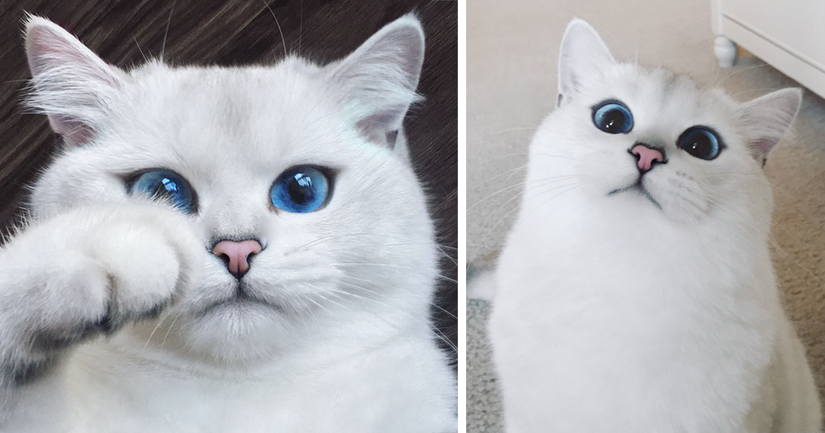This Cat Has The Most Beautiful Eyes Ever | Bored Panda