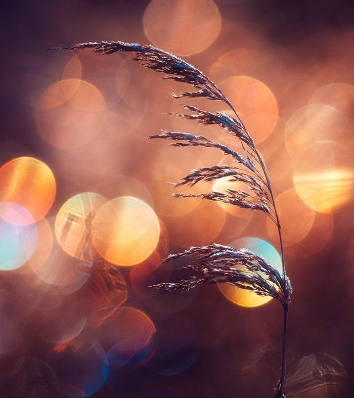 I Photograph Nature With Circular Bokeh Backgrounds
