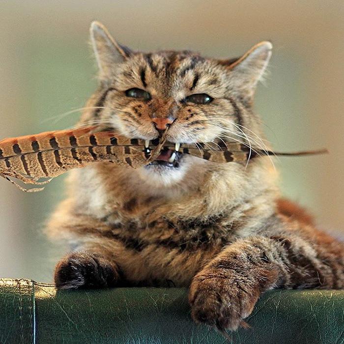 cats purr heals bones