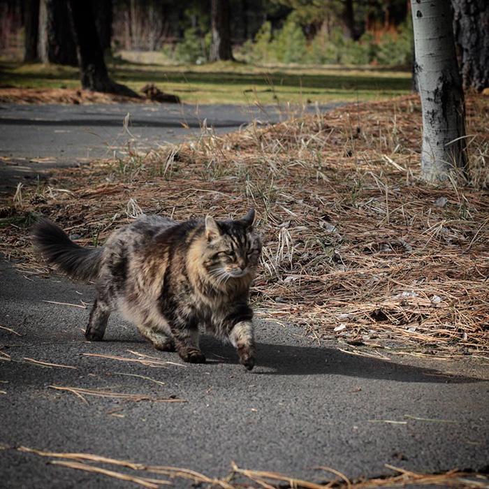 oldest-cat-living-guinness-world-records-corduroy-48