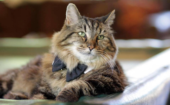 oldest-cat-living-guinness-world-records-corduroy-52