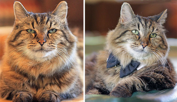 Meet The World's Oldest Cat Aged 26 Who Was Adopted From A Shelter