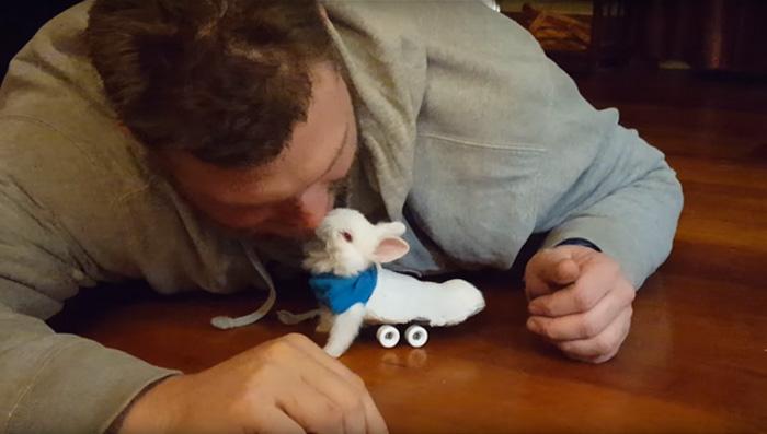 Paralyzed Bunny Gets A Tiny Skateboard Wheelchair To Move Around