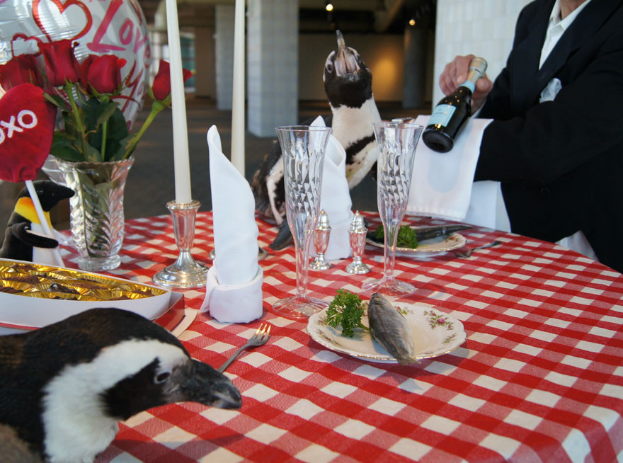 This Penguin Couple Just Celebrated Their 22nd Valentine S Day
