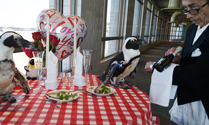 This Penguin Couple Just Celebrated Their 22nd Valentine's Day