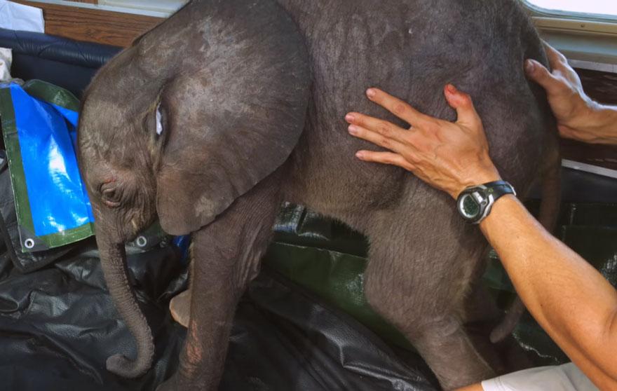 rescue-baby-elephant-moyo-roxy-danckwerts-wild-is-life-zimbabwe-17