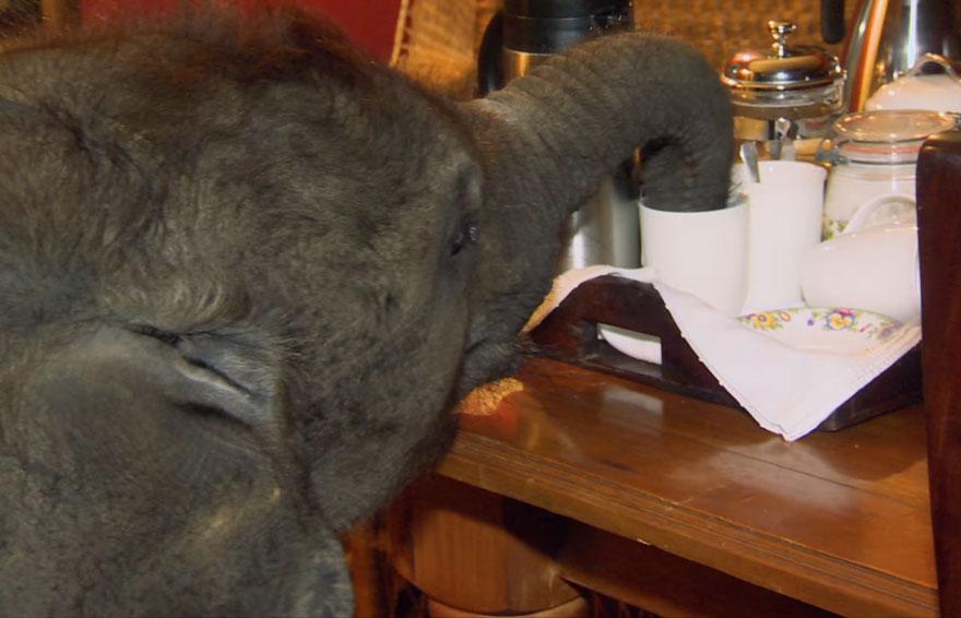 rescue-baby-elephant-moyo-roxy-danckwerts-wild-is-life-zimbabwe-7