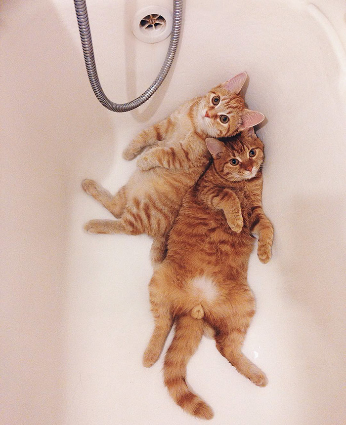 rescue-cats-inseparable-brothers-ginger-anyagrapes-19