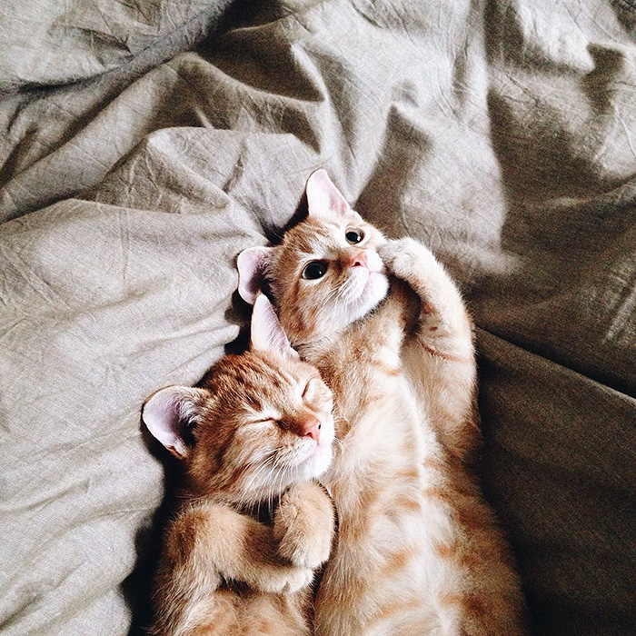 rescue-cats-inseparable-brothers-ginger-anyagrapes-22