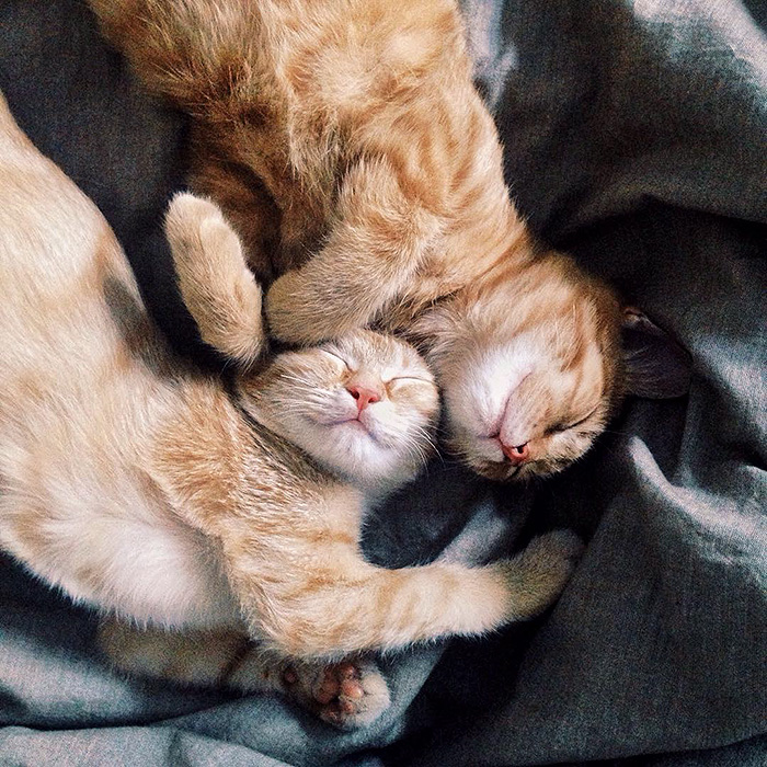 rescue-cats-inseparable-brothers-ginger-anyagrapes-3