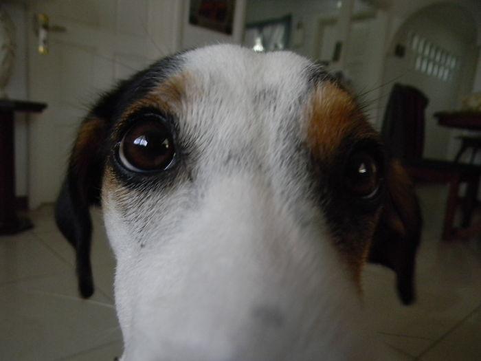 Coco The Strange