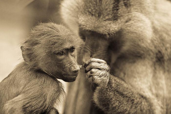 My Wildlife Photography In Sepia Tones