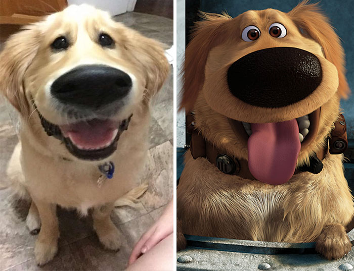 "This Snapchat Filter Makes Your Dog Look Like Dug From ""Up"""