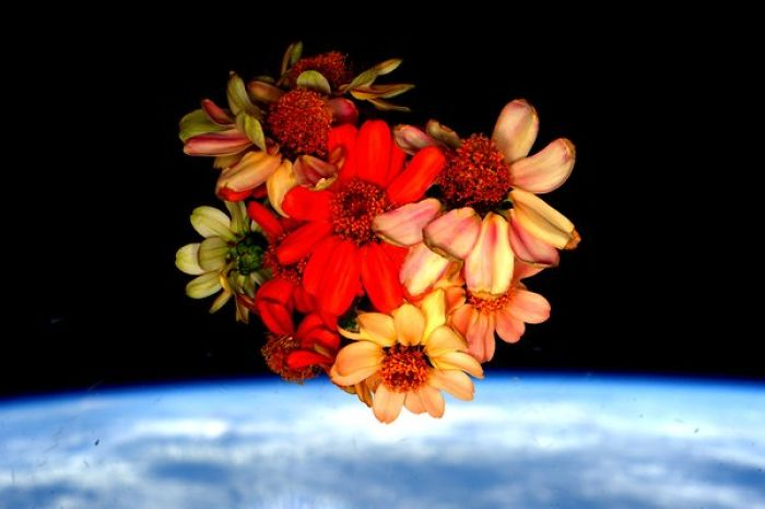 Space Flowers For Valentine's Day
