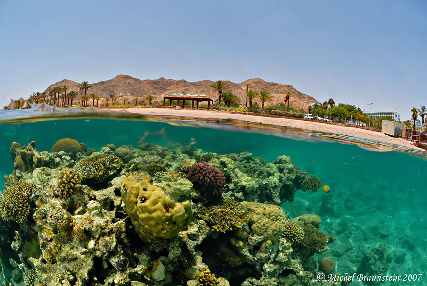 Eilat's Shore