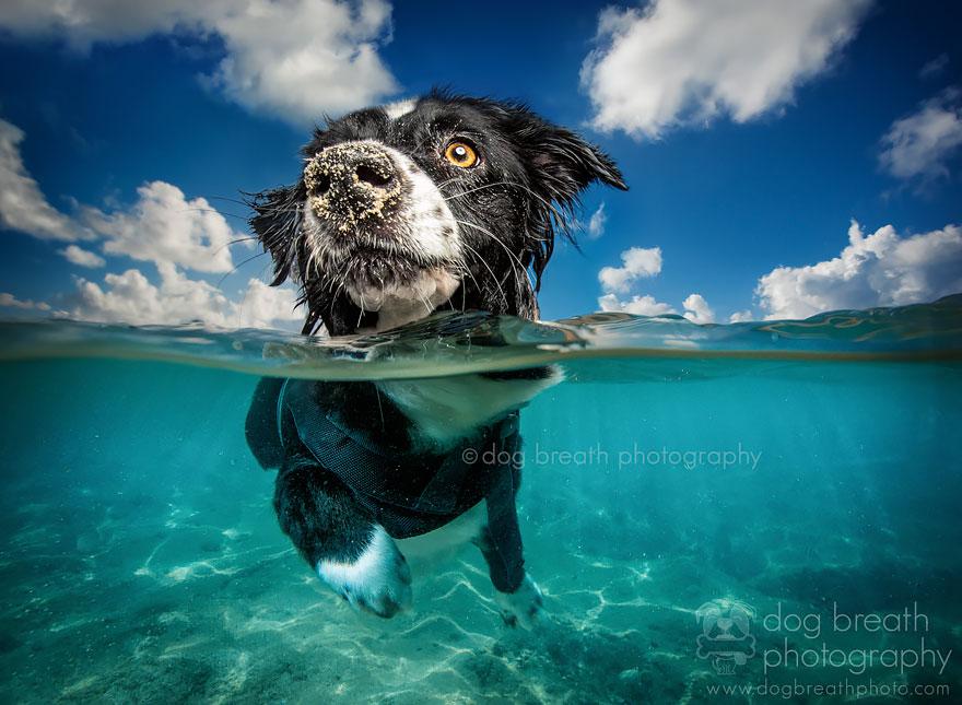Caribbean Dog