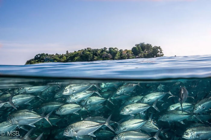 Sipadan Island And Its Characteristic Underwater World