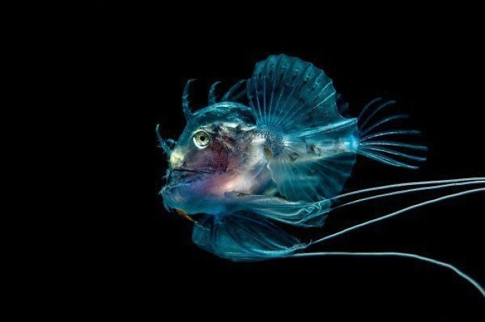 The Best Underwater Photos You've Ever Seen