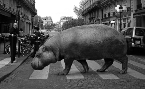Zoo Animals Invade The Streets To Show What Tolerant Society Would Look Like